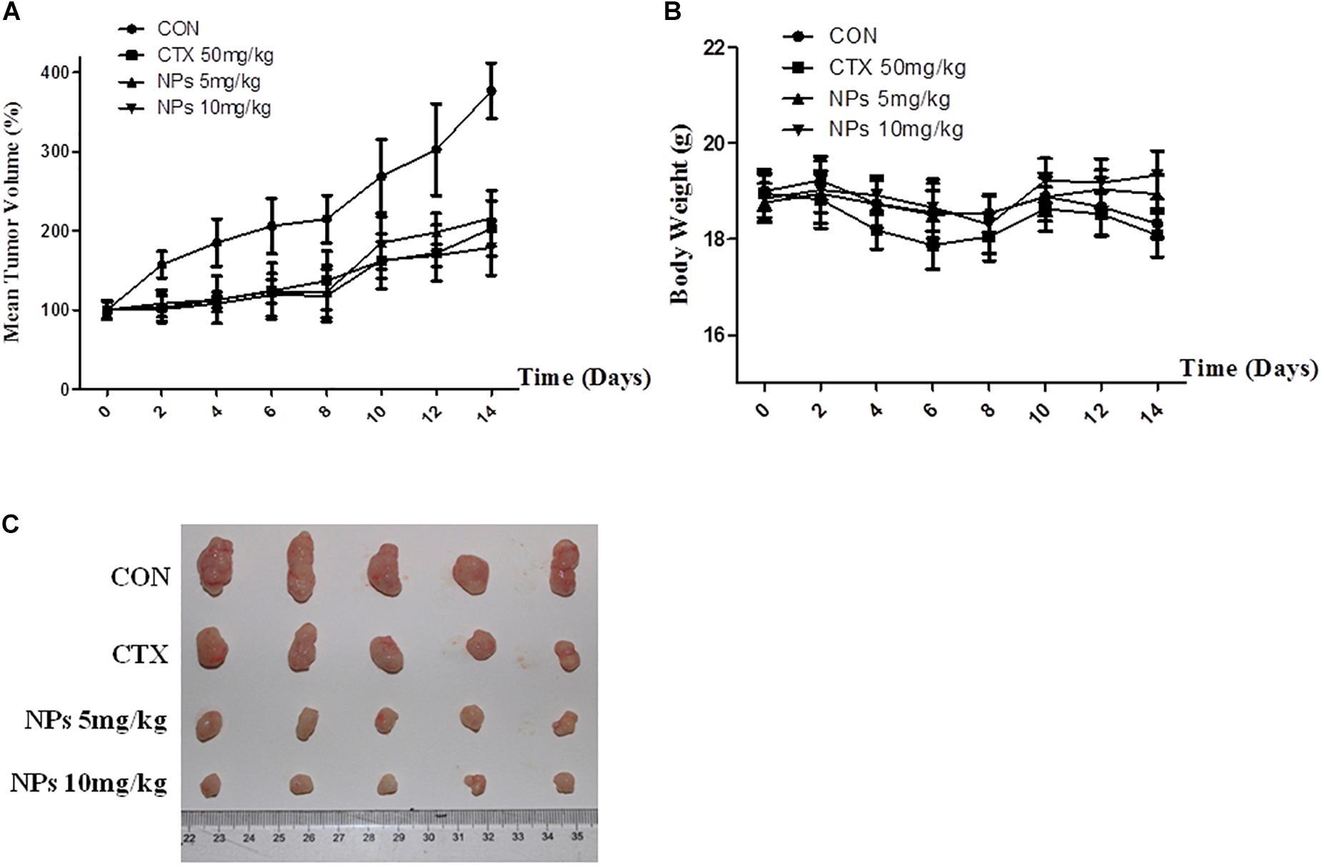 | Zinc doped copper oxide nanocomposites induced autophagy
