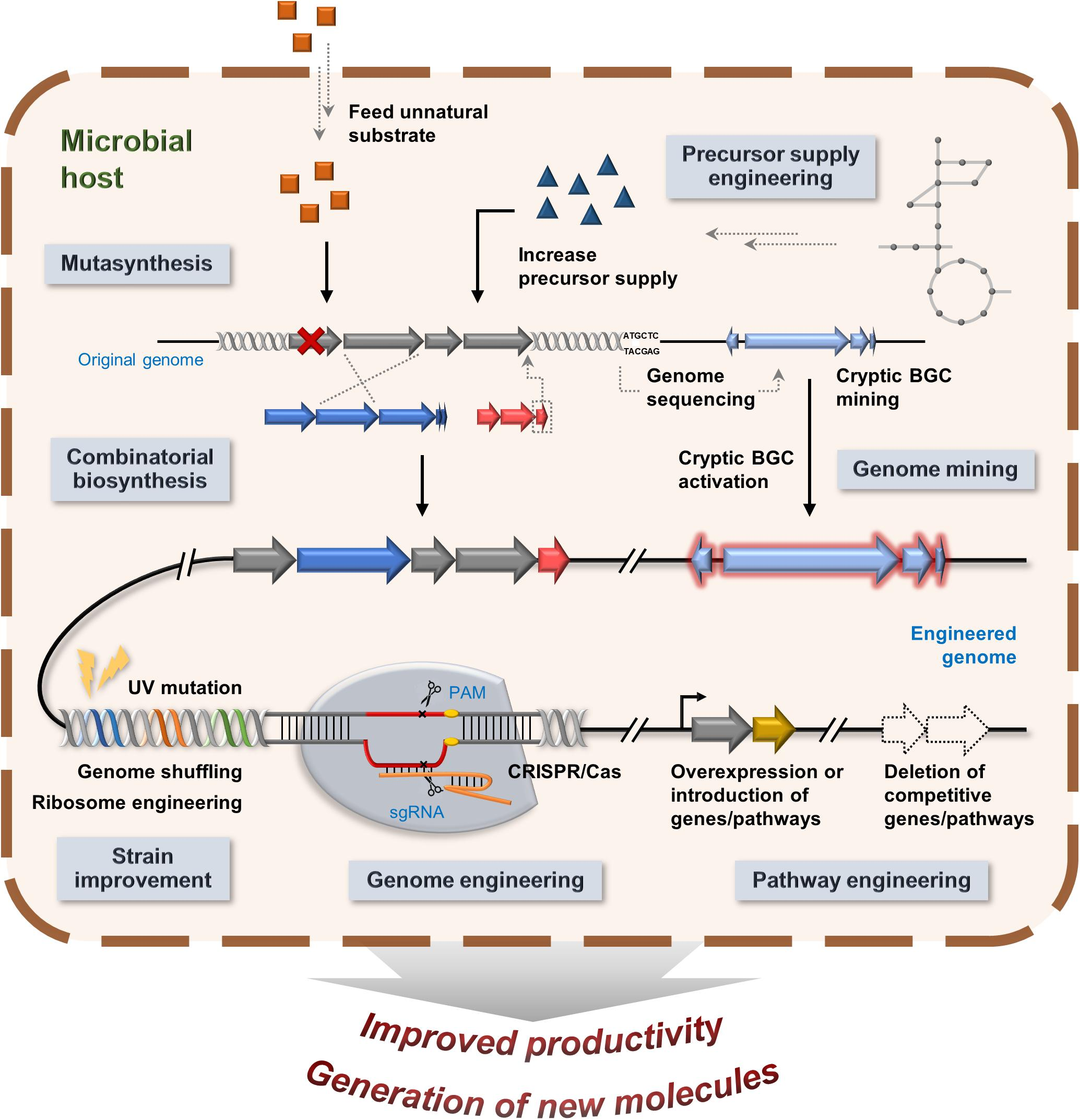 Frontiers A Review Of The Microbial Production Of Bioactive