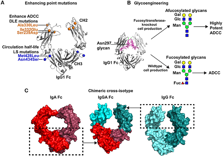 Frontiers | Conceptual Approaches to Modulating Antibody