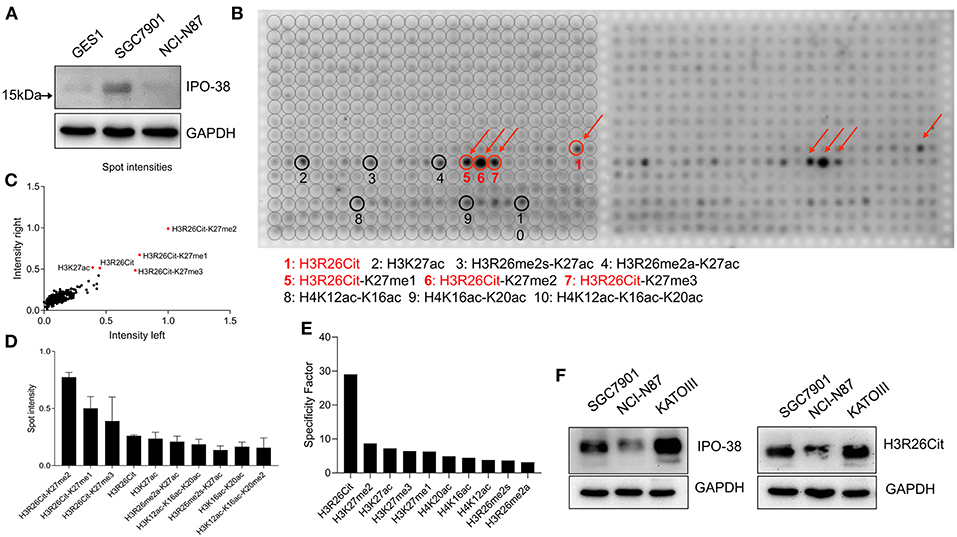 synthetic genomics ipo nanalyze