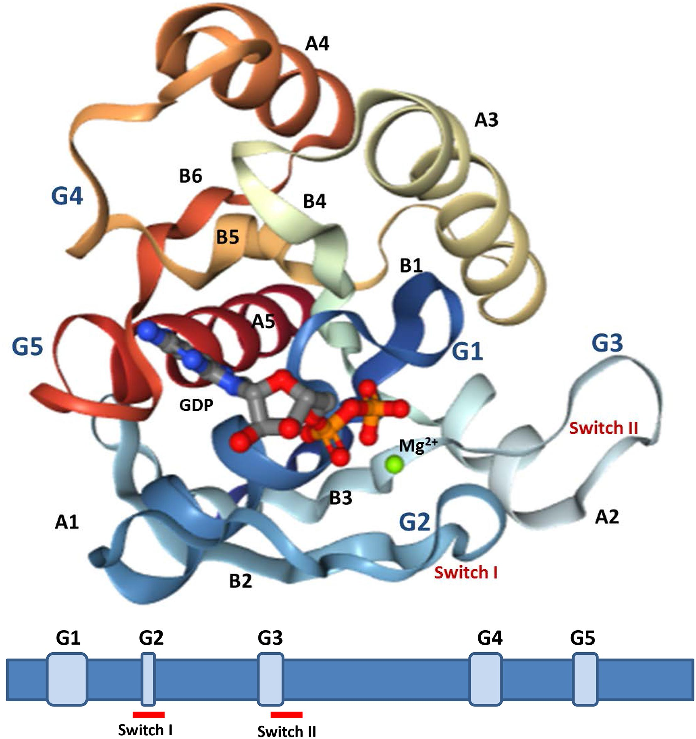Frontiers | The Ras Superfamily of Small GTPases in Non