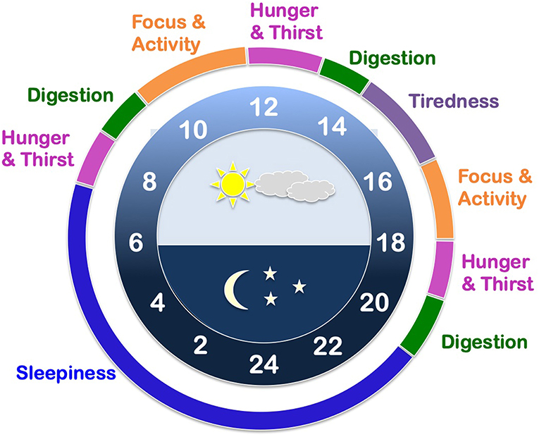 Figure 1 - An example of an internal clock on a 24-h time scale.