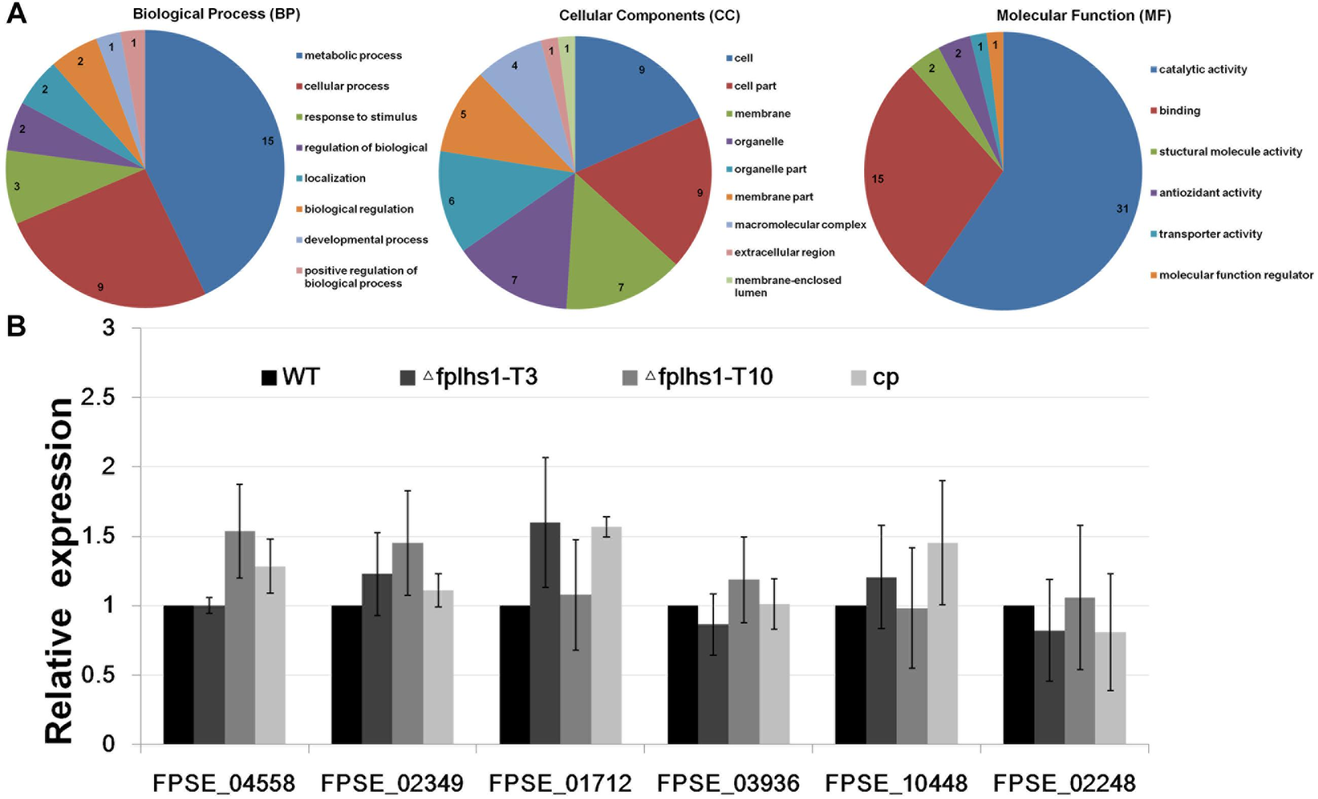 Frontiers | The ER Lumenal Hsp70 Protein FpLhs1 Is Important