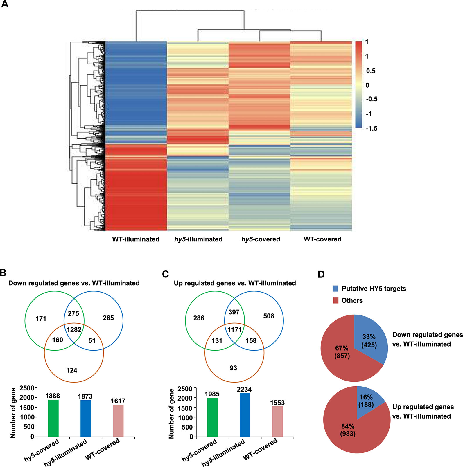 Frontiers | HY5 Contributes to Light-Regulated Root System