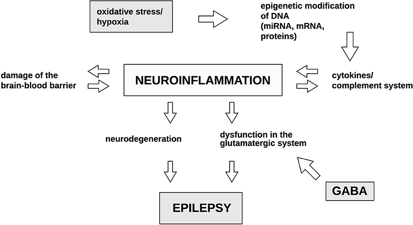 Frontiers   Advances in the Potential Biomarkers of Epilepsy   Neurology
