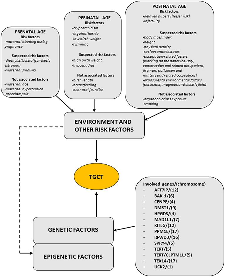Frontiers | On the Origin of Testicular Germ Cell Tumors: From