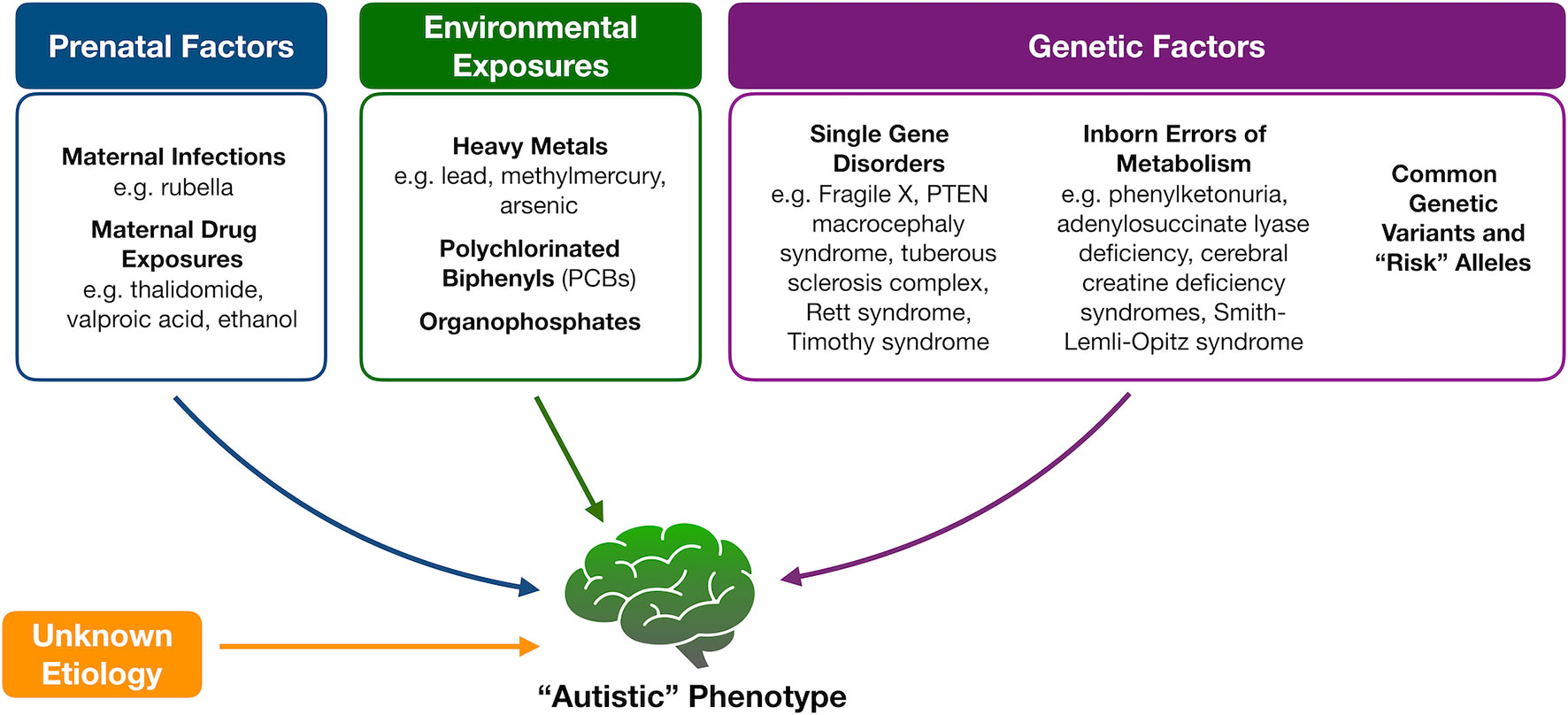 Screening For Autism Spectrum Disorders State Of The Art In Europe >> Frontiers Untargeted Metabolomics For Autism Spectrum