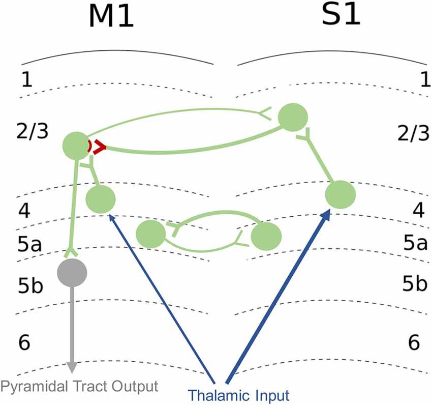 "Frontiers | Putting the ""Sensory"" Into Sensorimotor Control"