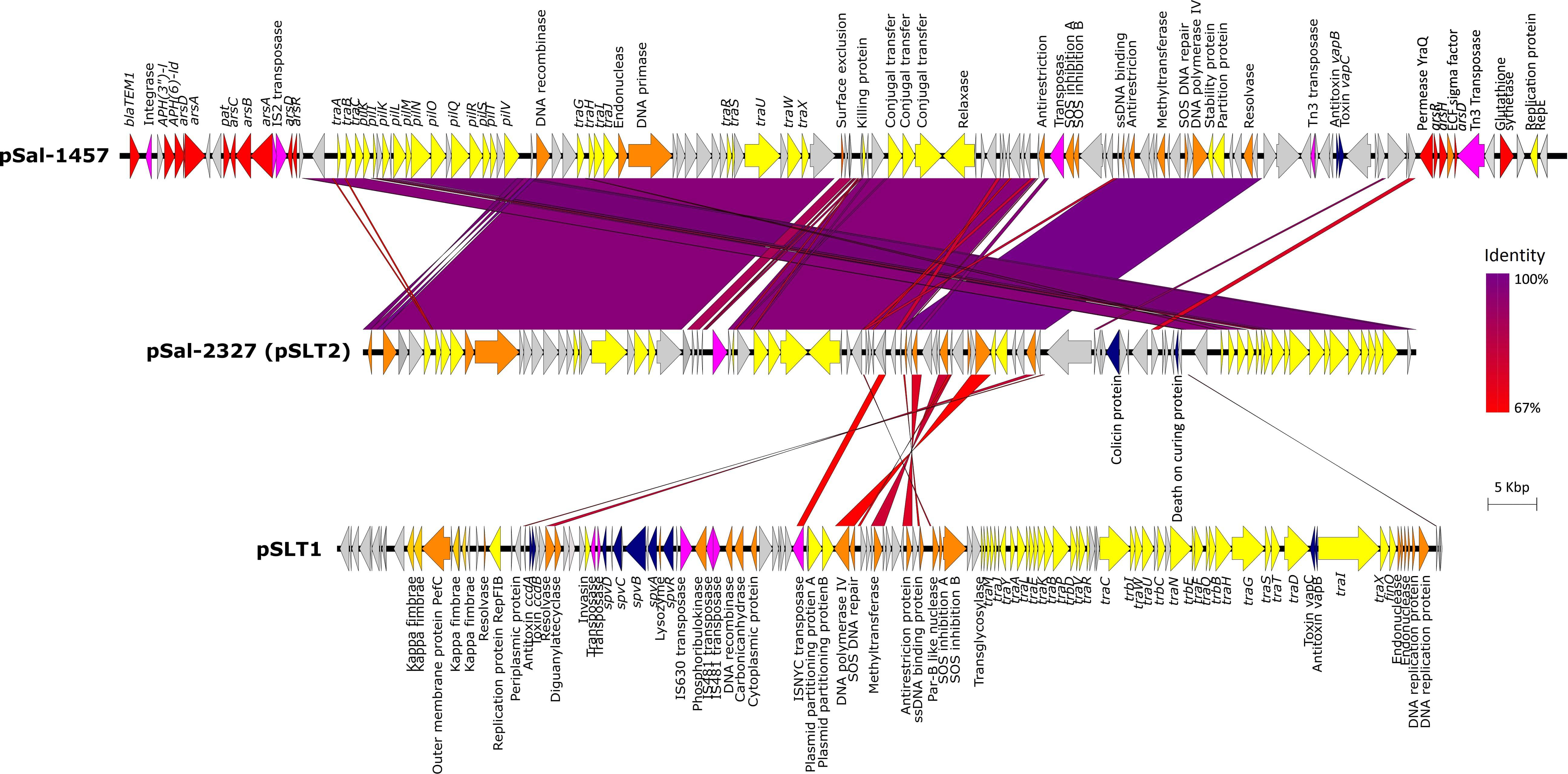 Frontiers | Comparative Genomics and Phenotypic