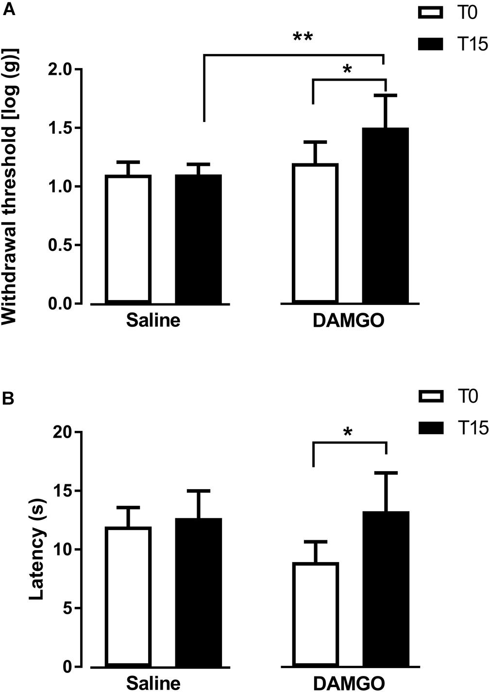 Frontiers | Neuropathic Pain Induced Alterations in the Opioidergic