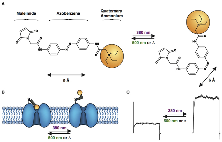 Quaternary Amine -quaternary ammonium  Quaternary Amine