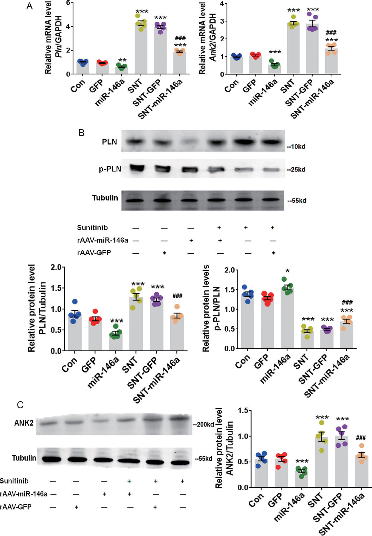 Frontiers | Downregulation of miR-146a Contributes to
