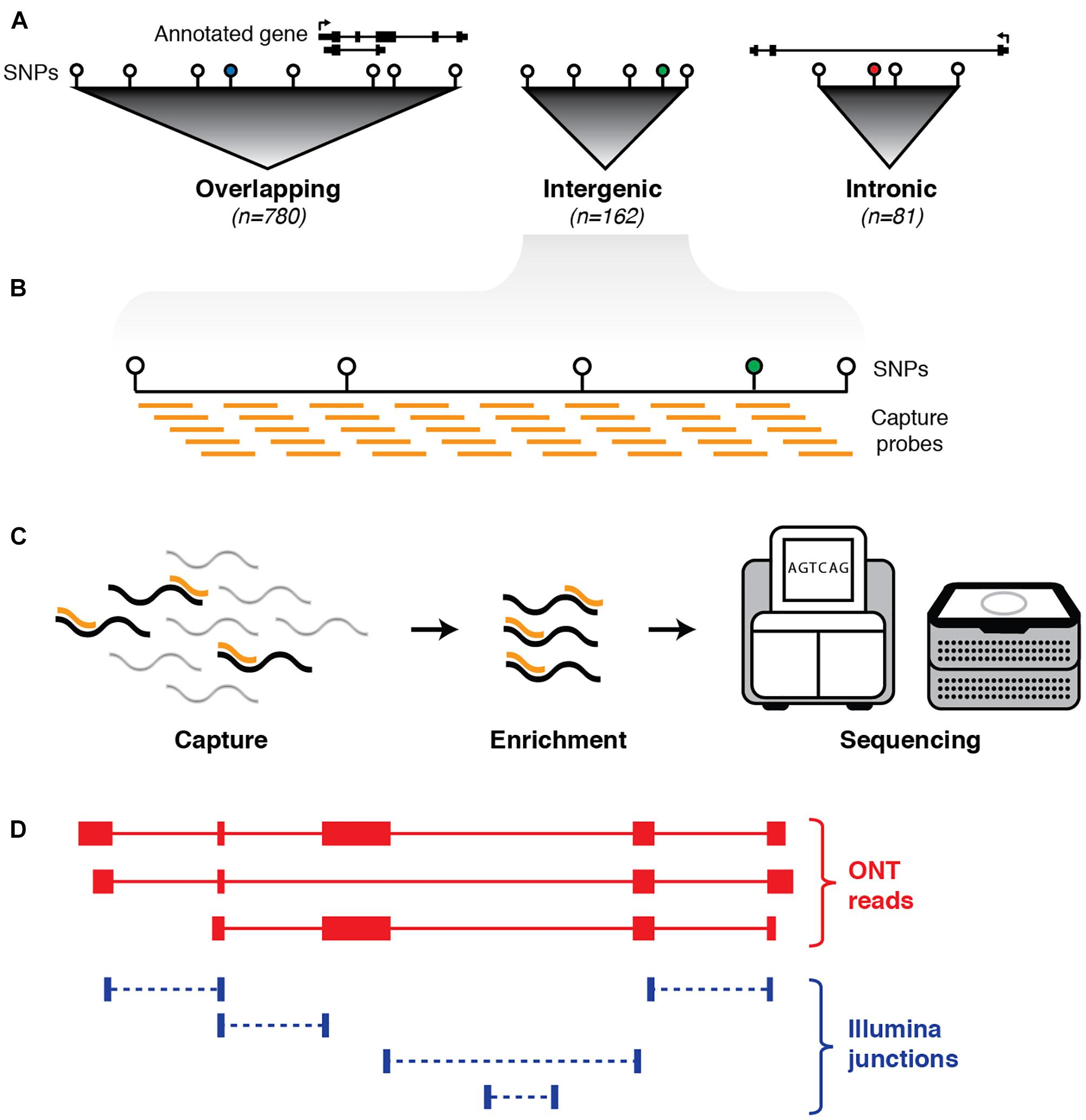 Frontiers | Targeted, High-Resolution RNA Sequencing of Non