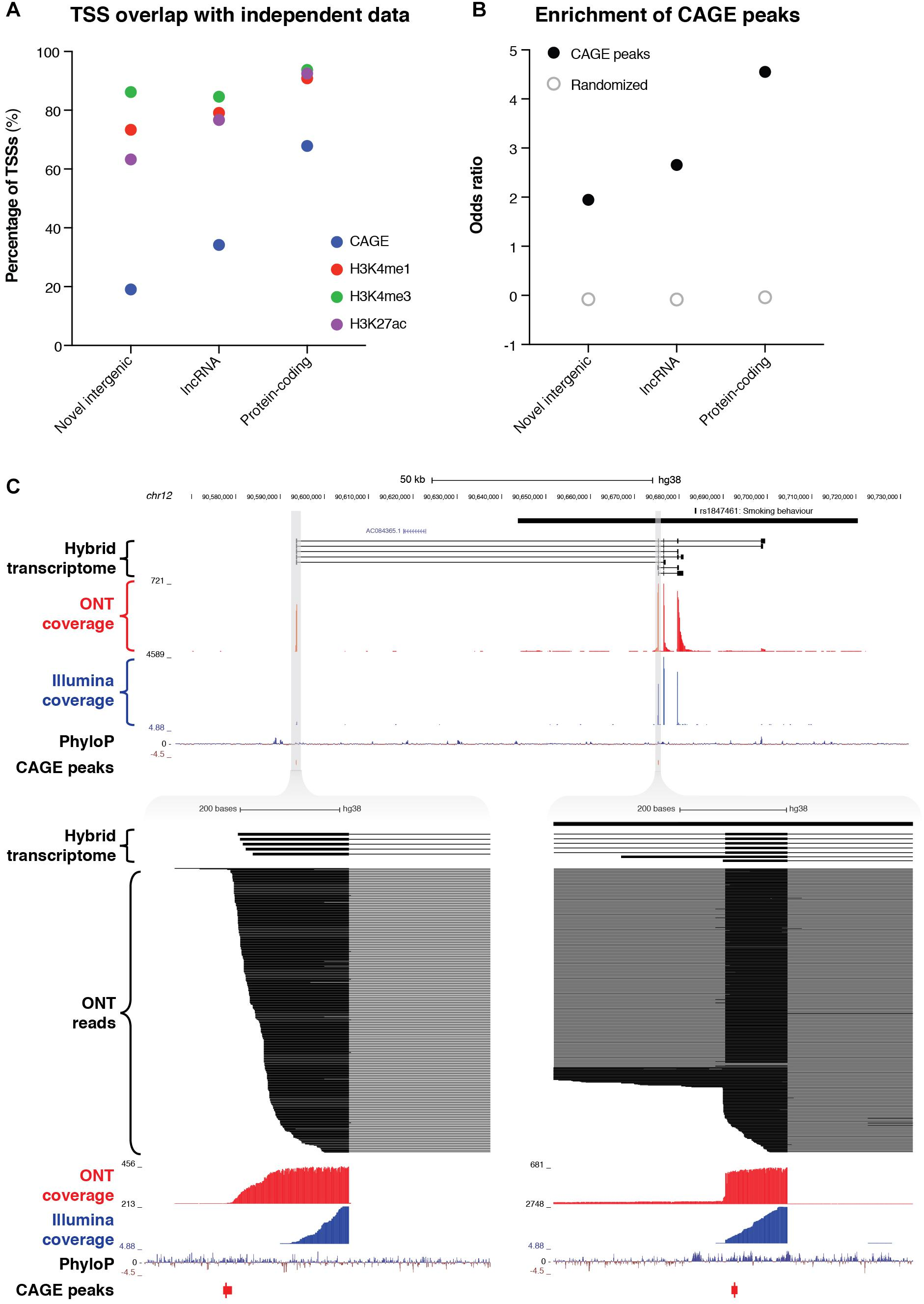 Frontiers | Targeted, High-Resolution RNA Sequencing of Non-coding