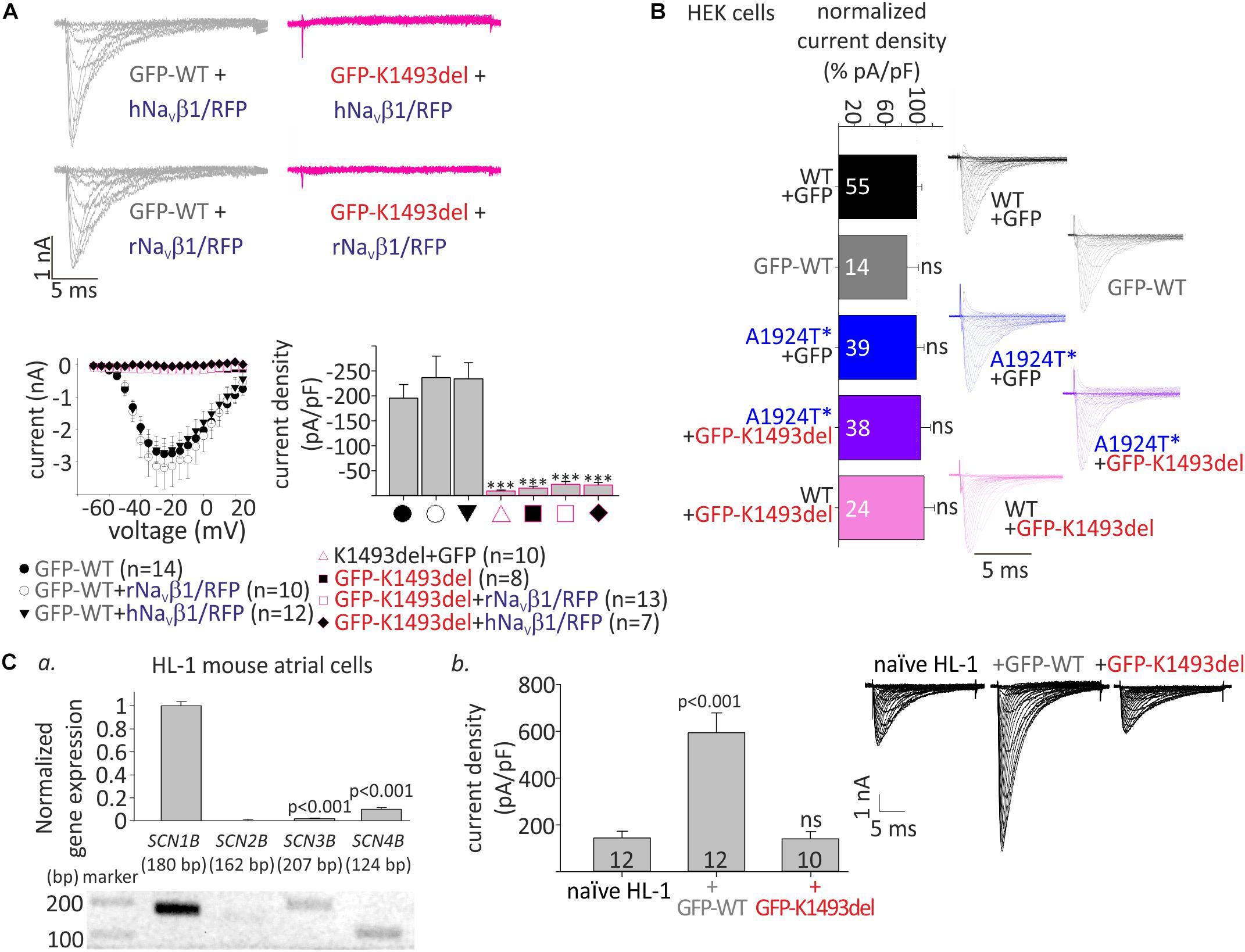 Frontiers   Mutations in NaV1 5 Reveal Calcium-Calmodulin