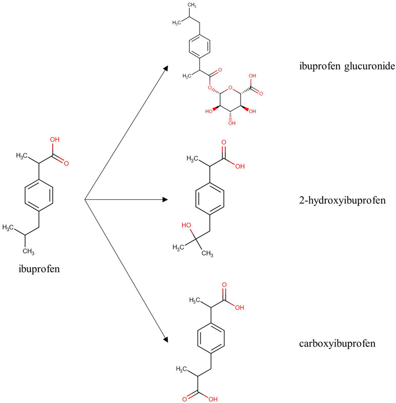 Frontiers | In Vivo Metabolism of Ibuprofen in Growing