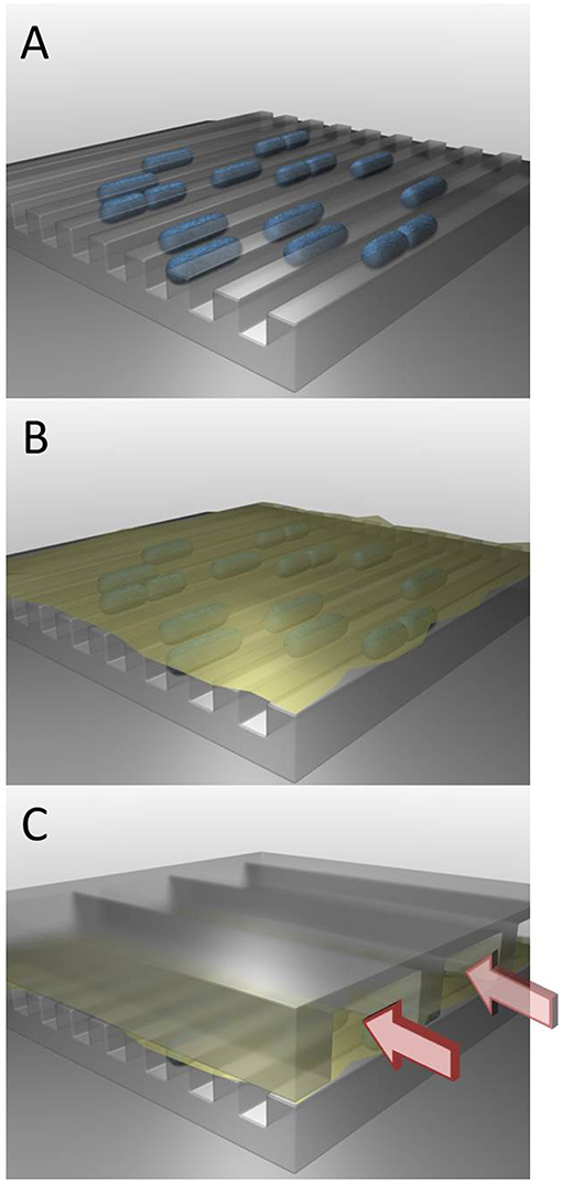 Figure 3 - A microfluidic device for studying bacteria's survival mechanism.