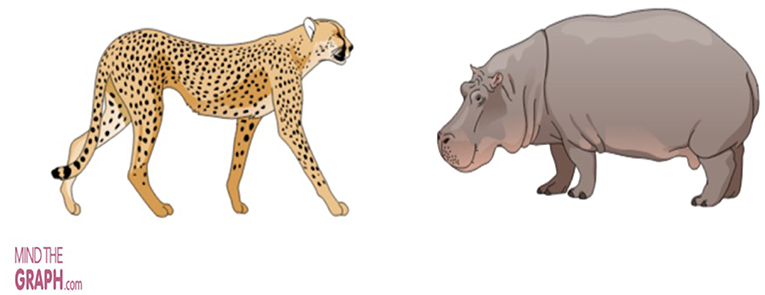 Figure 1 - A cheetah and a hippopotamus are two different species.