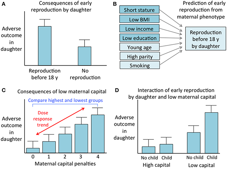Frontiers | Low Maternal Capital Predicts Life History Trade