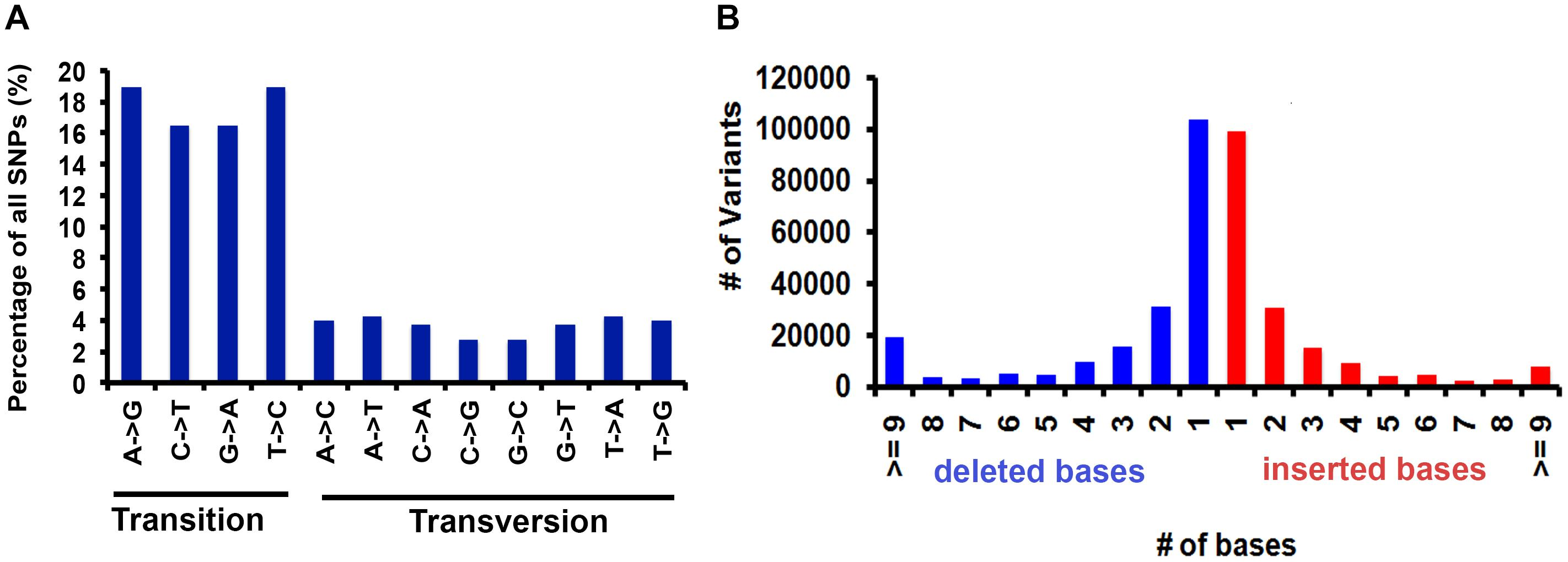 Frontiers | Whole Genome Sequencing and Comparative Genomic Analysis