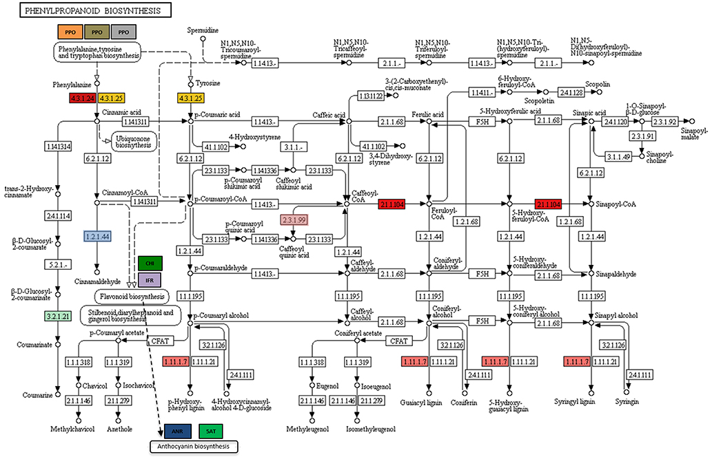 Frontiers   Transcriptome and Metabolome Reprogramming in
