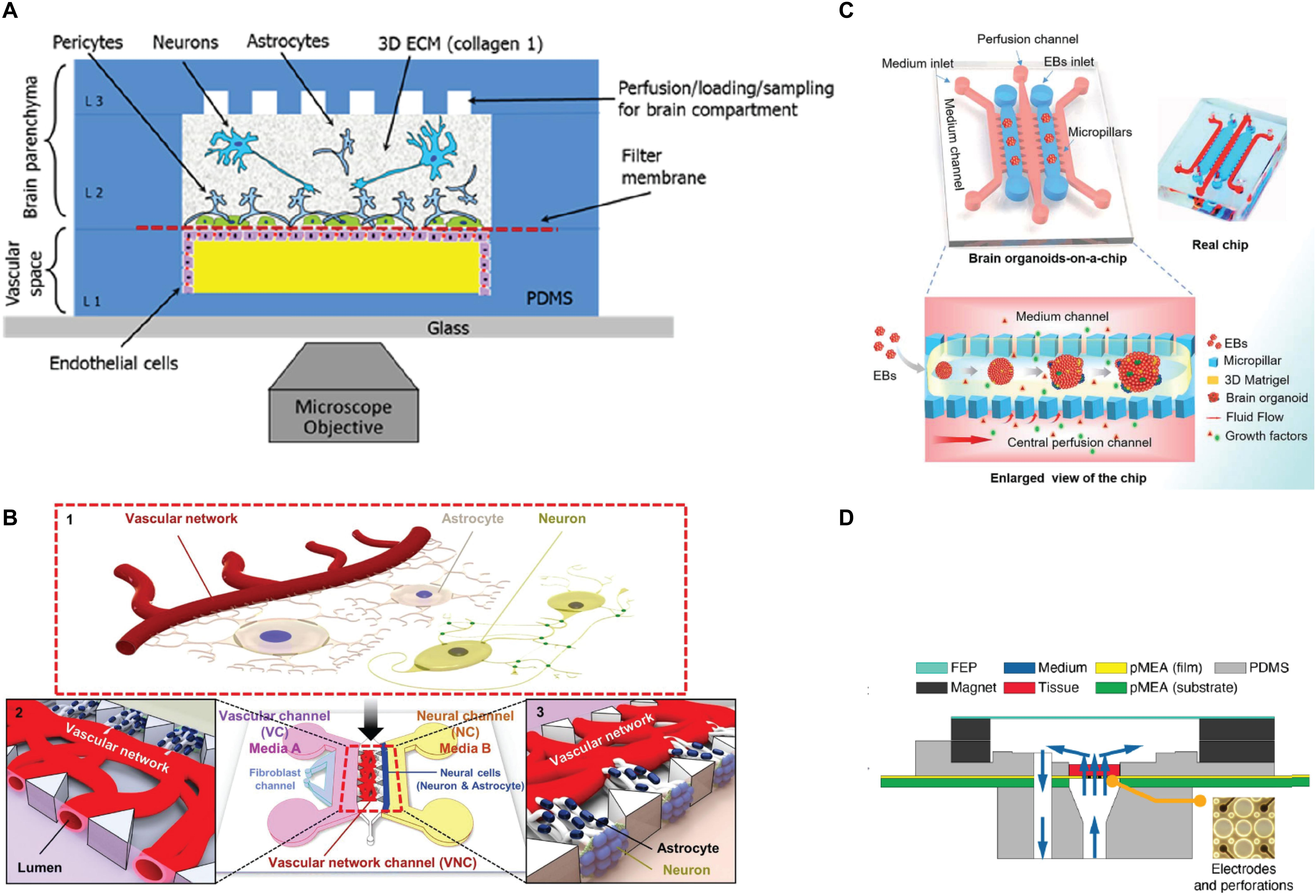 Frontiers | Tissue Response to Neural Implants: The Use of Model