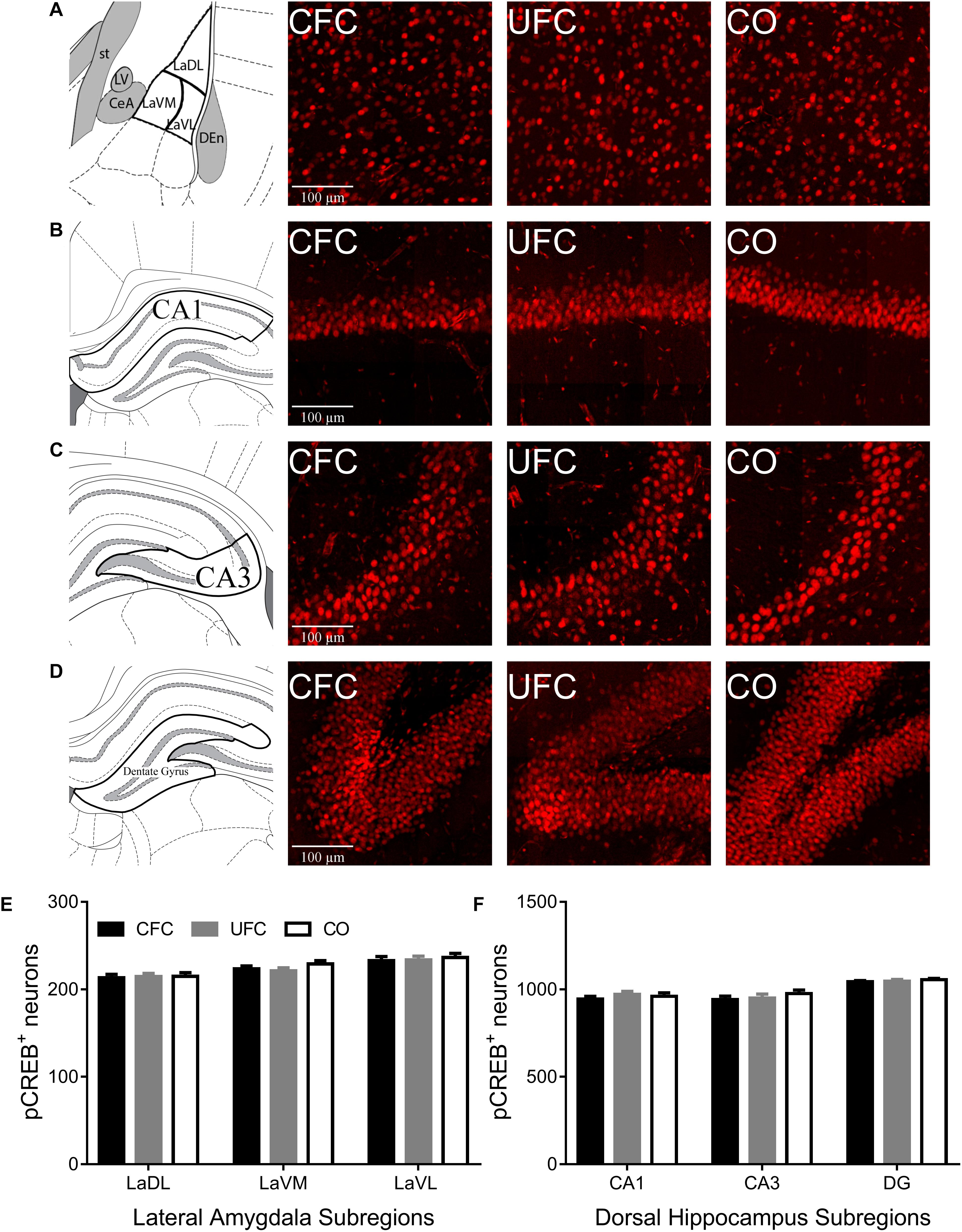 Frontiers | Contextual Fear Conditioning Alter Microglia Number and