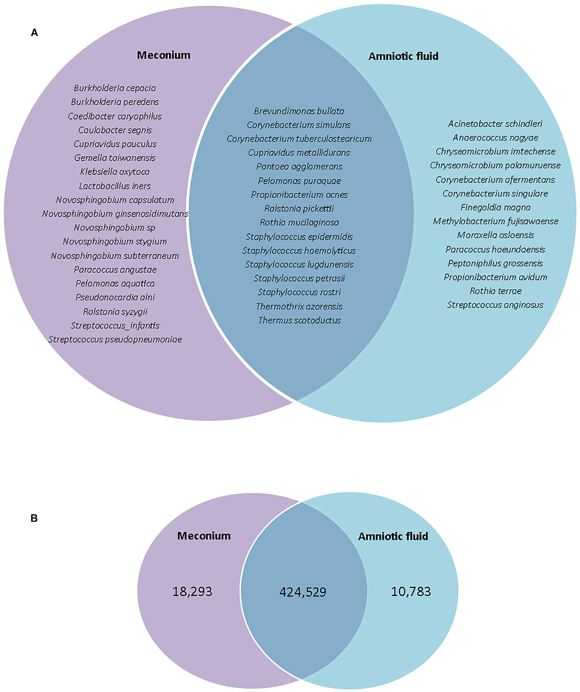 Frontiers | The Not-so-Sterile Womb: Evidence That the Human