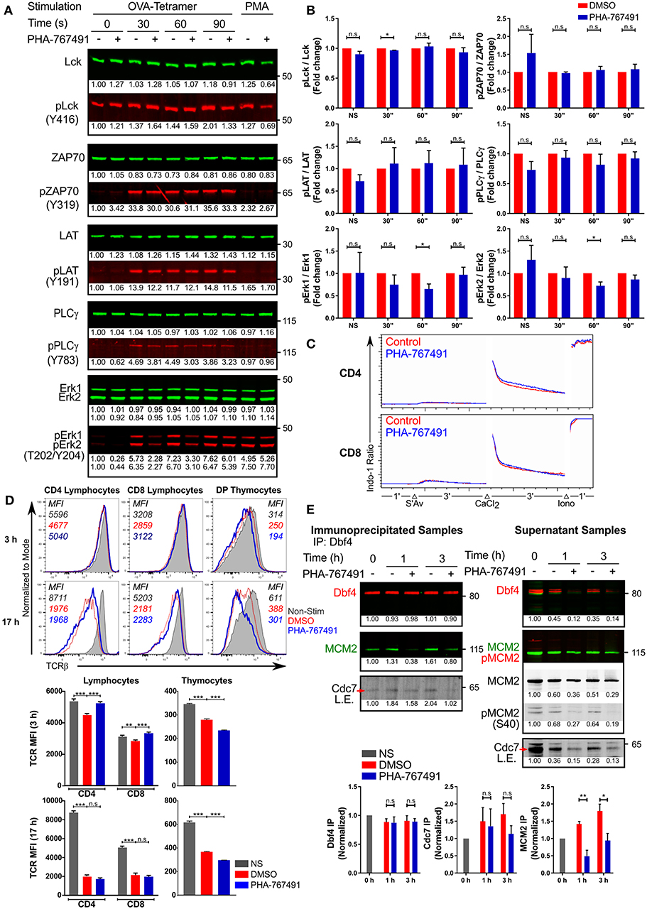 Frontiers   A Dual Inhibitor of Cdc7/Cdk9 Potently Suppresses T Cell