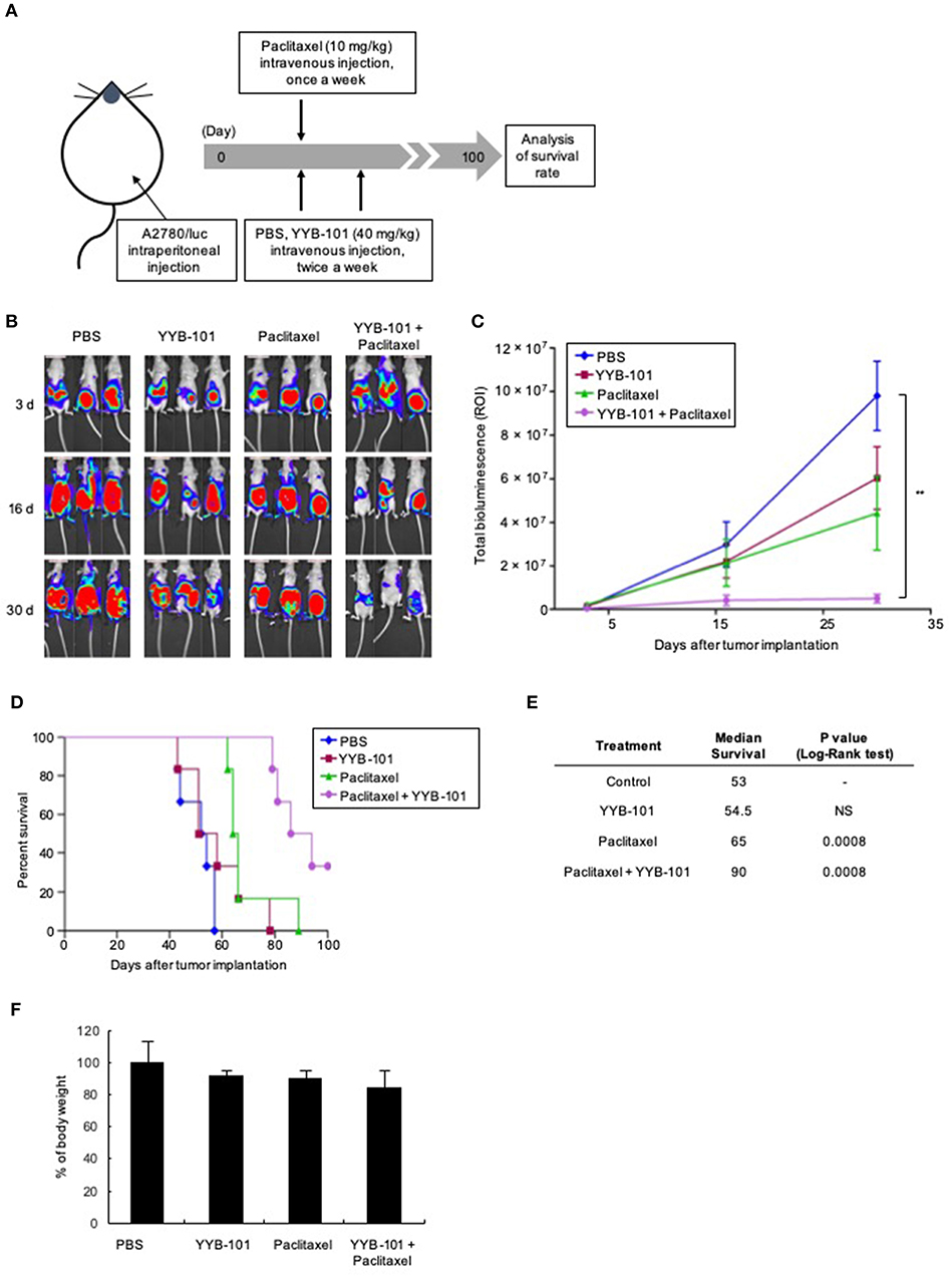 Frontiers Humanized Anti Hepatocyte Growth Factor Monoclonal Antibody Yyb 101 Inhibits Ovarian Cancer Progression Oncology