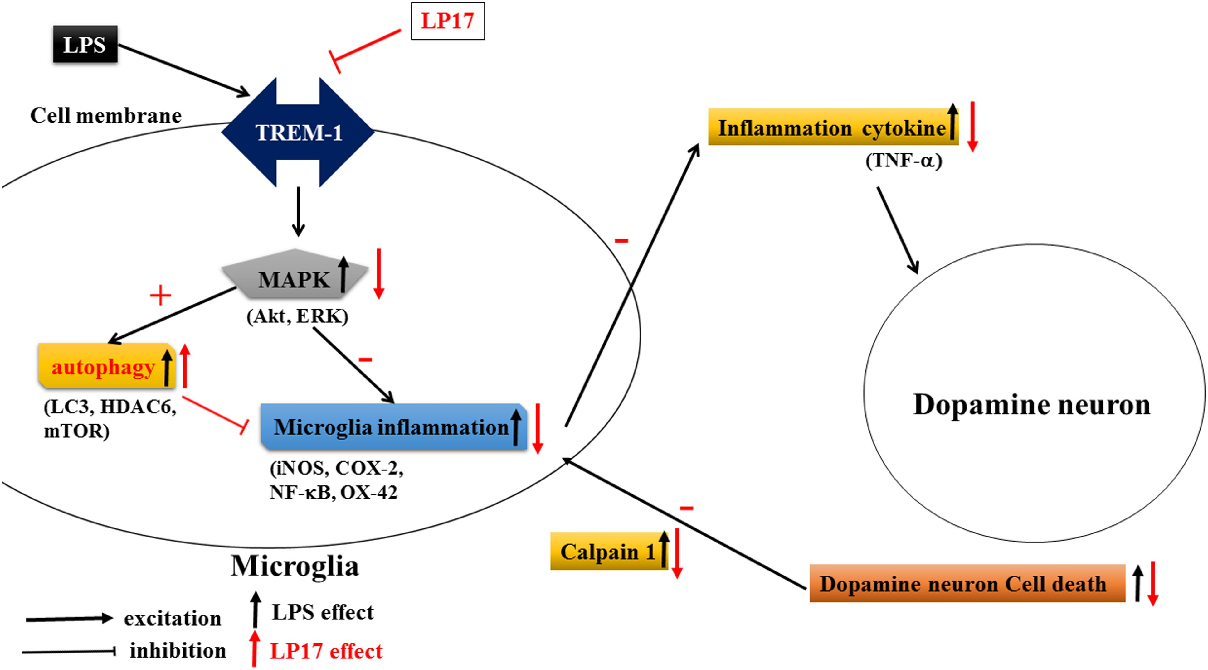 Frontiers   Therapeutic Effect of Modulating TREM-1 via Anti