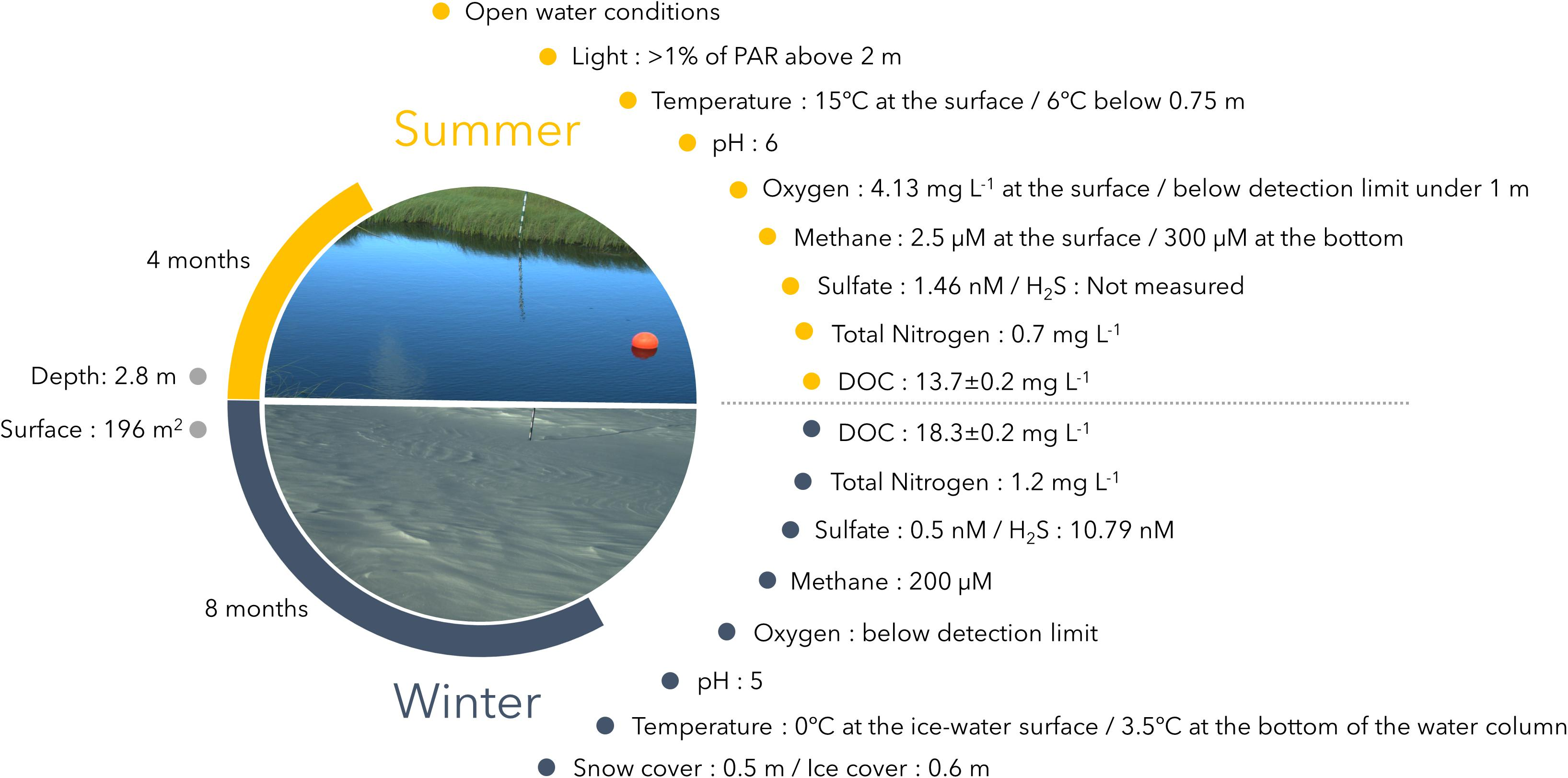 Frontiers | Contrasting Winter Versus Summer Microbial
