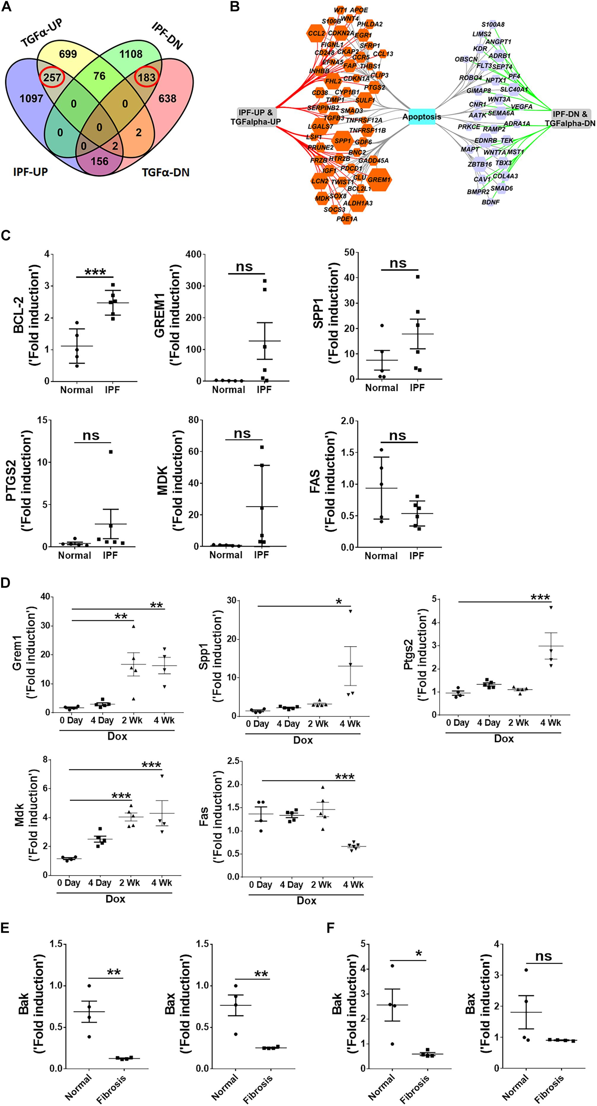 Frontiers | Dysregulation of Mesenchymal Cell Survival