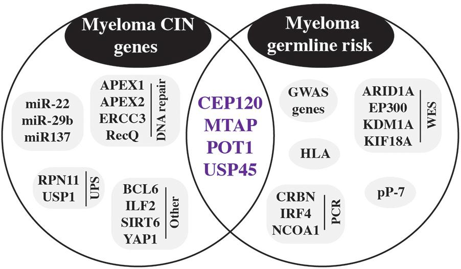 Frontiers | Germline Risk Contribution to Genomic