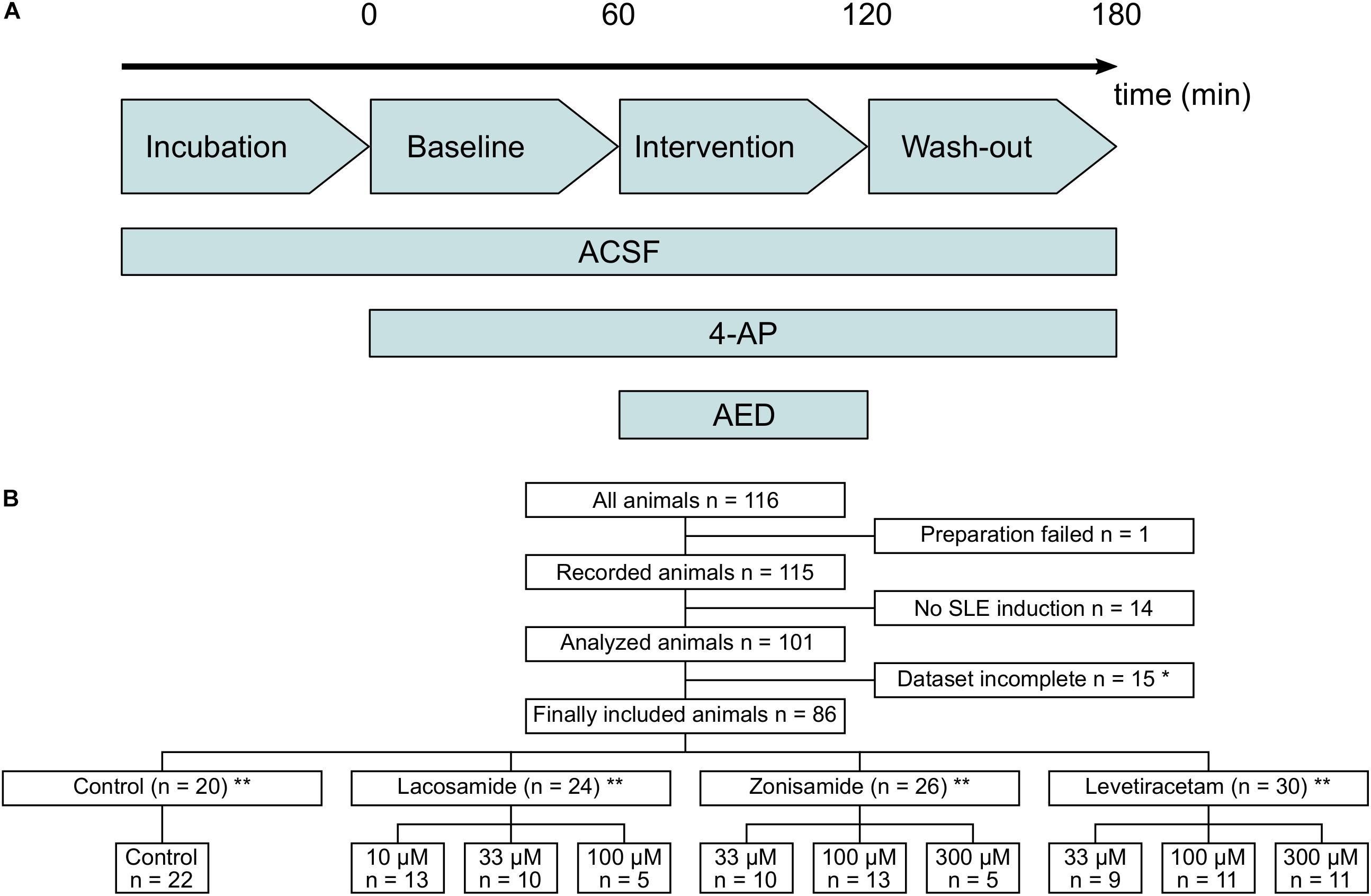 Frontiers | The 4-Aminopyridine Model of Acute Seizures in