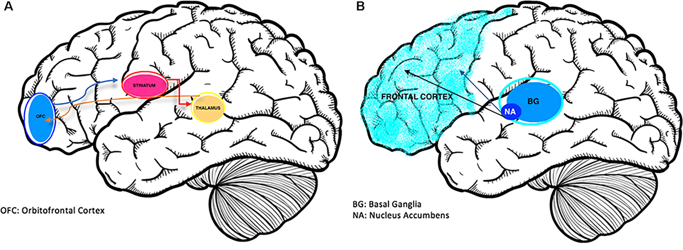 Adhd Real Brain Disorder Or Further >> Frontiers Co Morbid Obsessive Compulsive Disorder And
