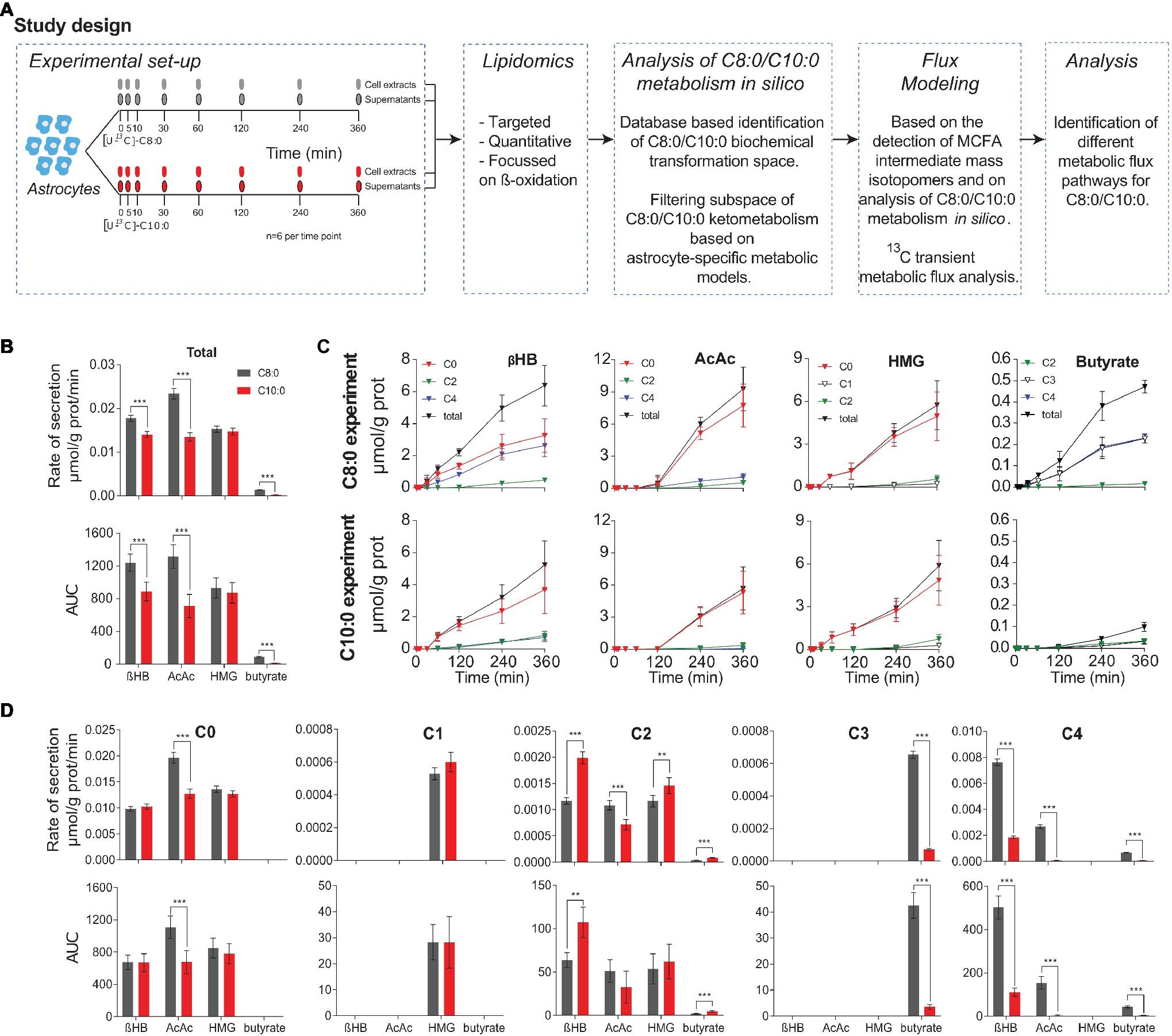 Frontiers | Differential Metabolism of Medium-Chain Fatty