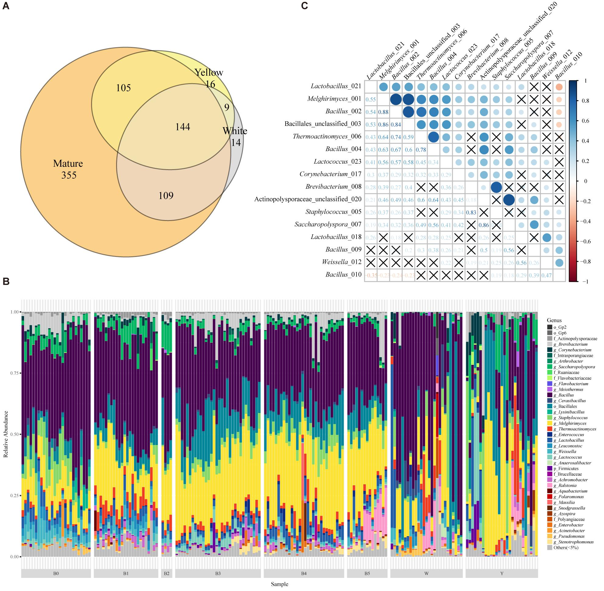 Frontiers | Deciphering the Composition and Functional Profile of
