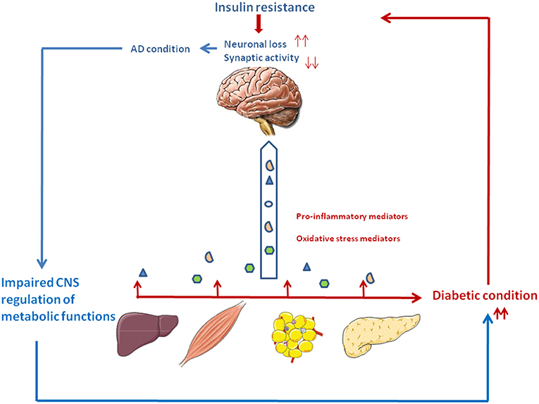 Frontiers | Hypothesis and Theory: Circulating Alzheimer's