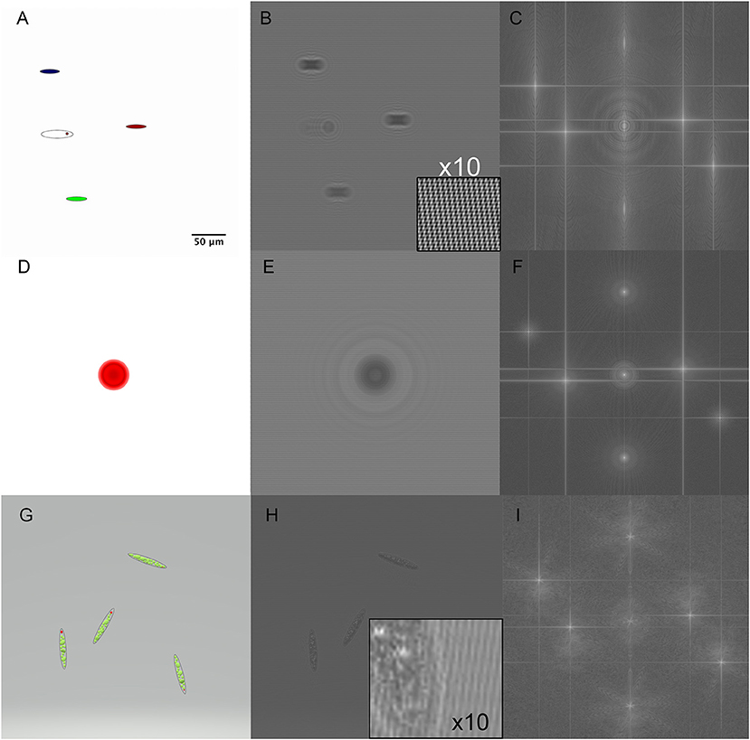 Frontiers   Multiwavelength Digital Holographic Imaging and Phase