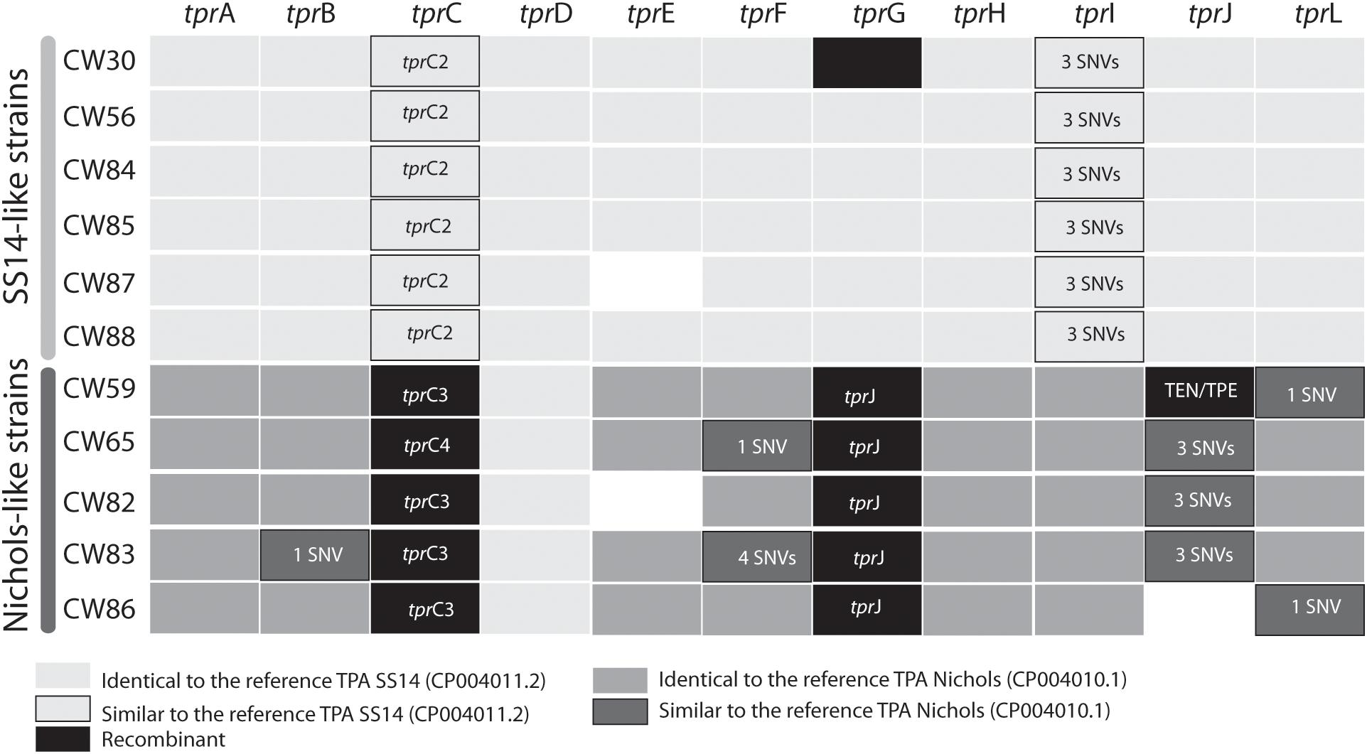 Frontiers | Directly Sequenced Genomes of Contemporary Strains of