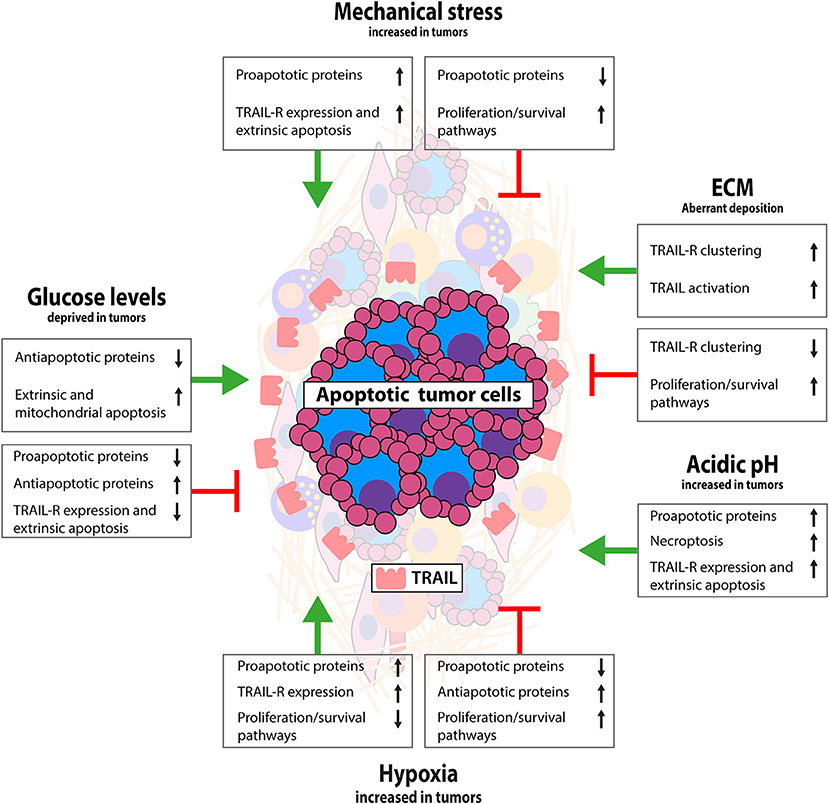 Frontiers | Multiple Interactions Between Cancer Cells and