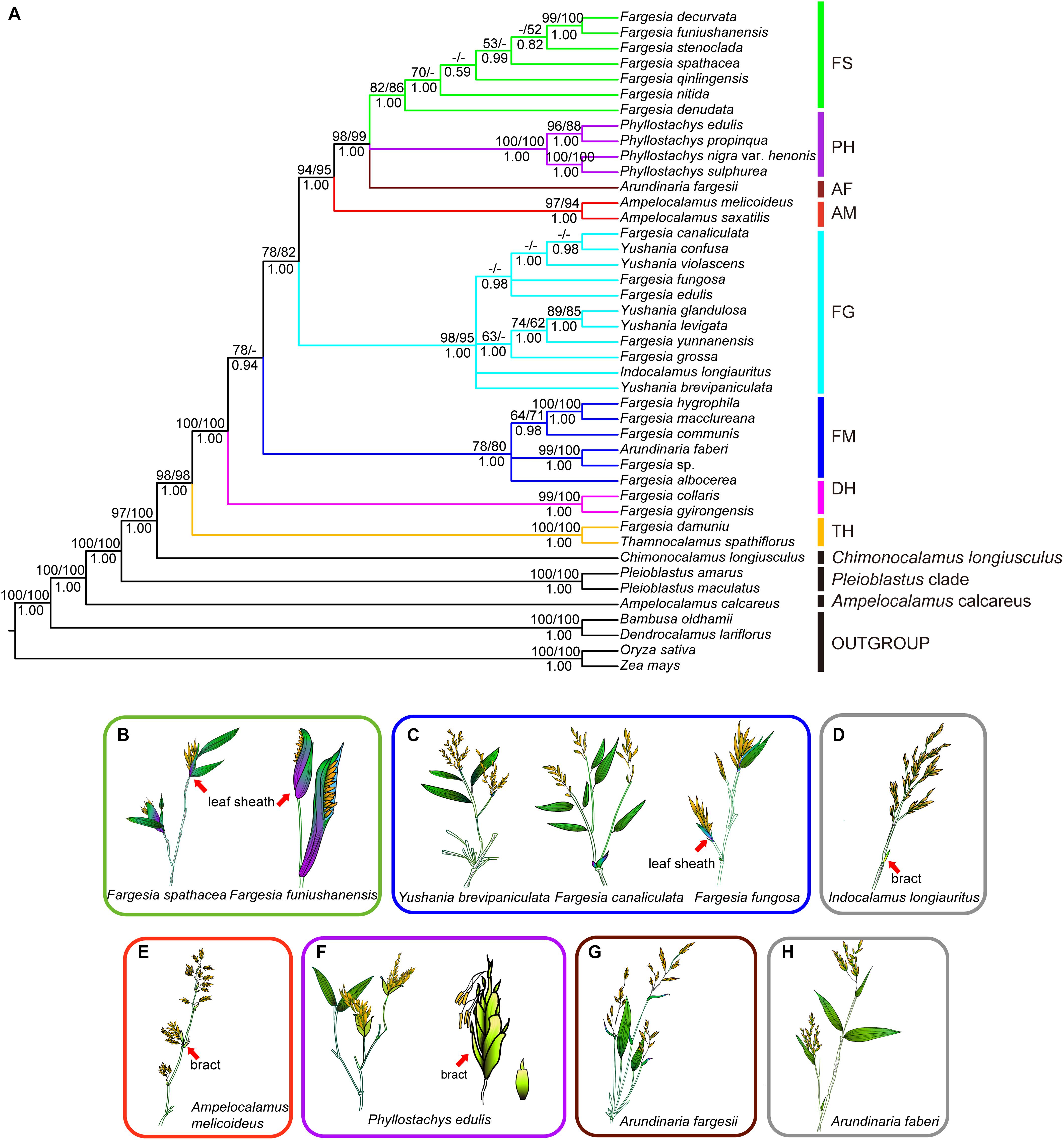 Frontiers | Straight From the Plastome: Molecular Phylogeny