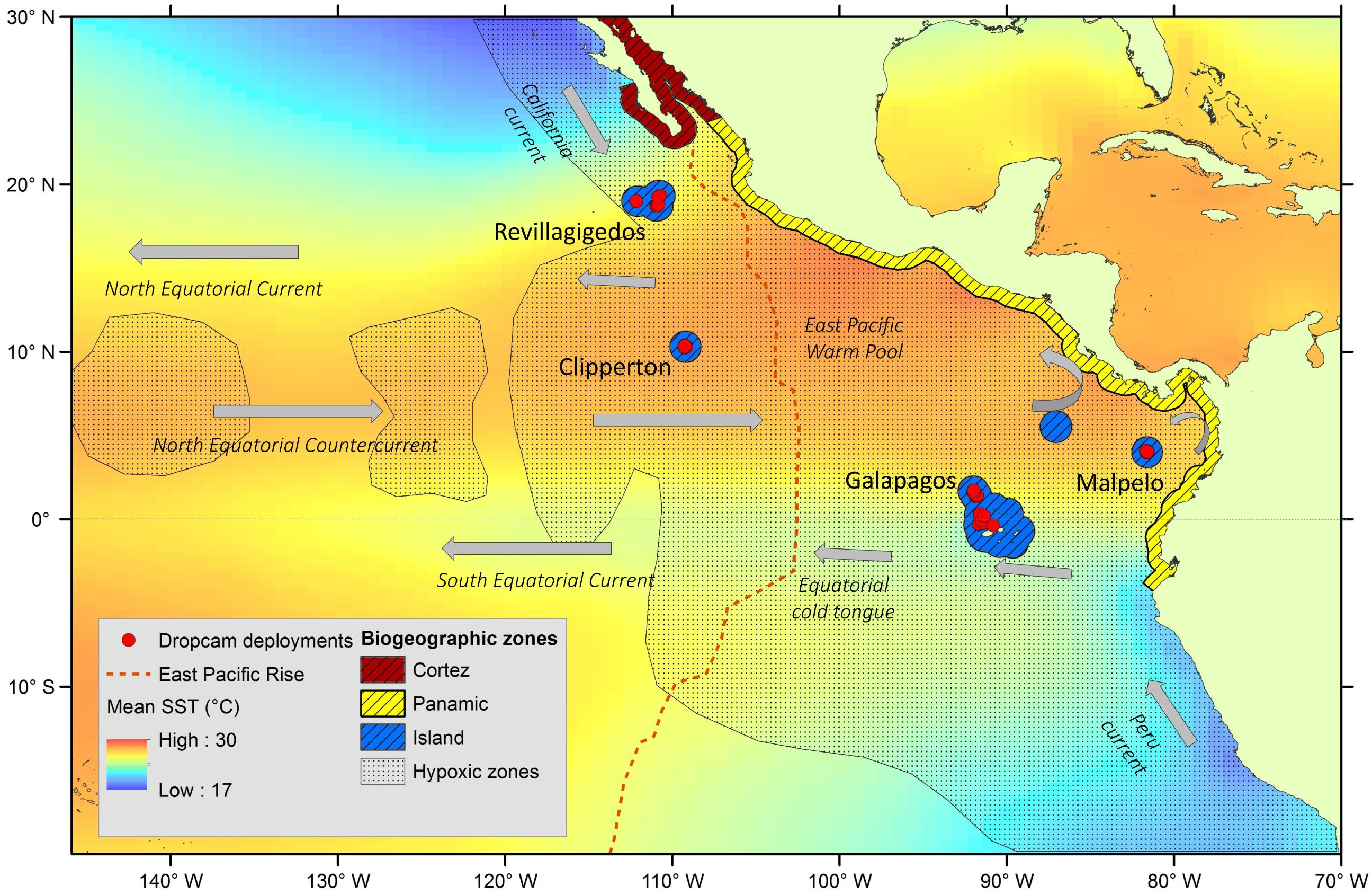 Frontiers | Patterns in Bathyal Demersal Biodiversity and Community