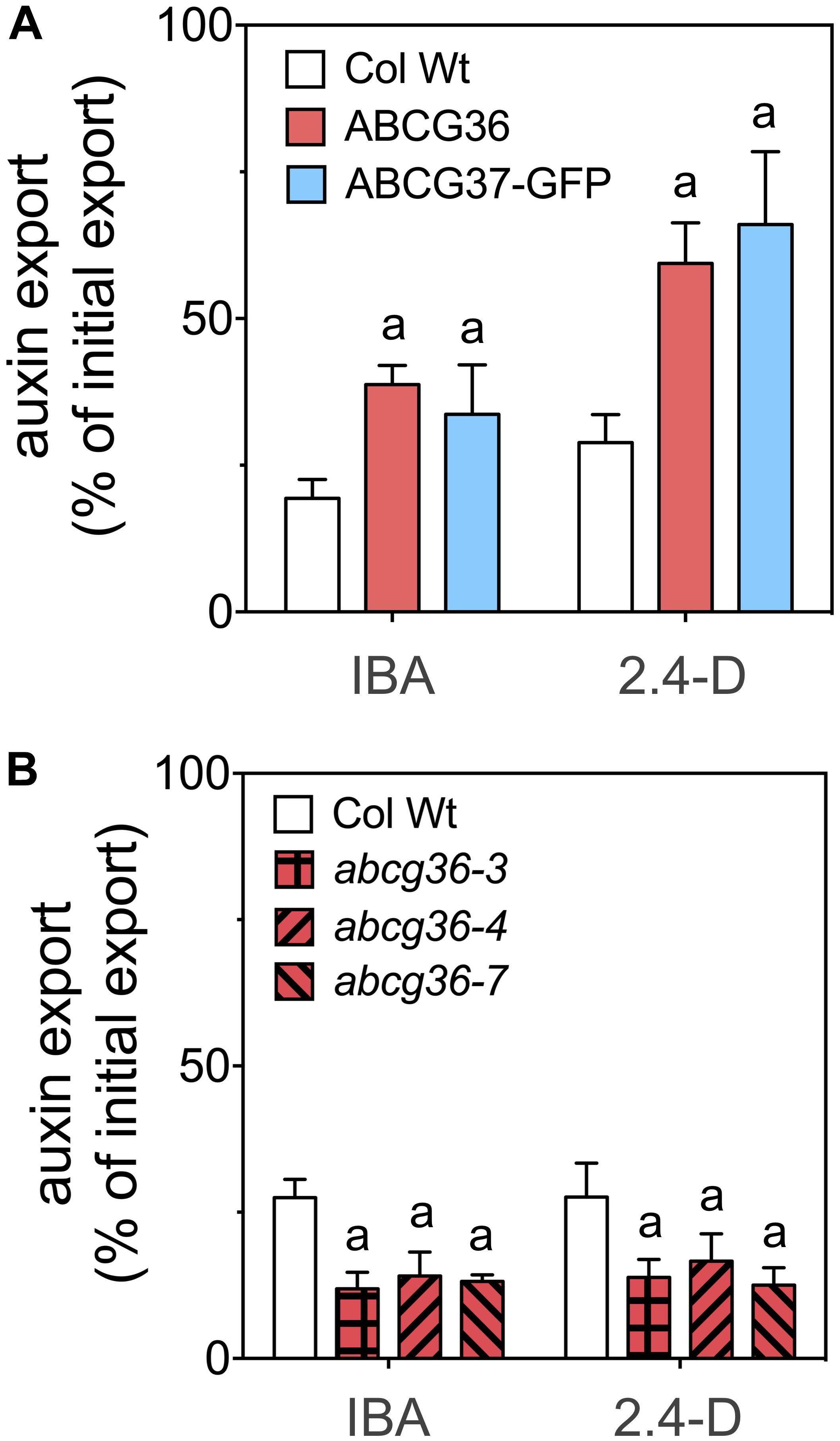 Frontiers | ABCG36/PEN3/PDR8 Is an Exporter of the Auxin