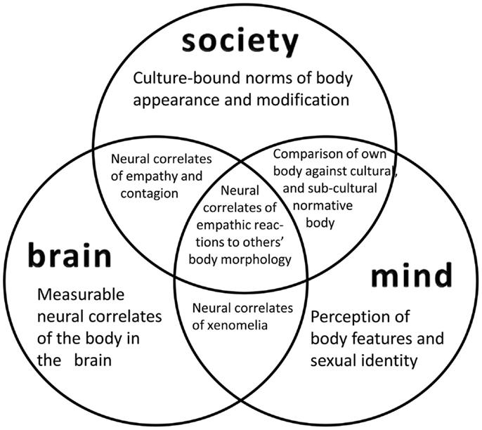 mind brain identity theory essay