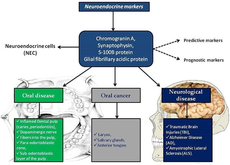 neuroendocrine cancer tumor markers antibiotice pentru giardia