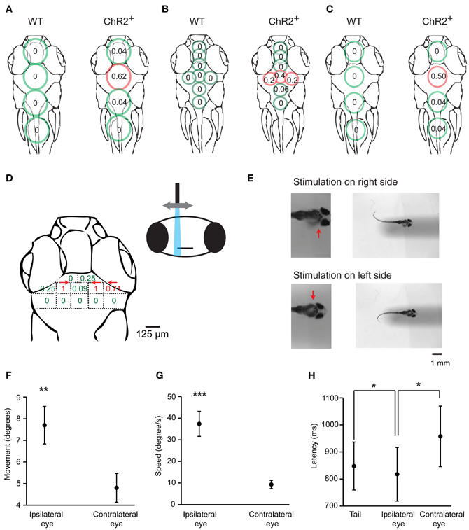 Frontiers Control Of A Specific Motor Program By A Small Brain