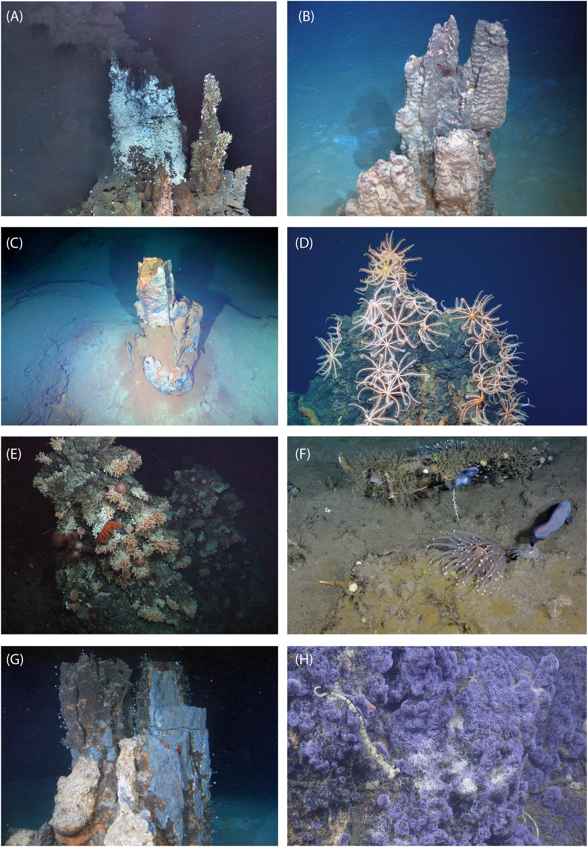 """3 strds Green Sea Sediment Jasper collier 18/"""""""