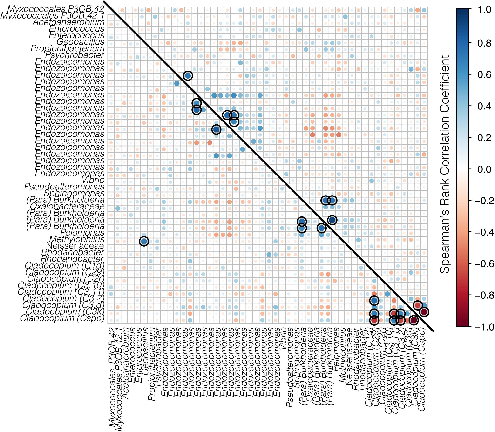 Frontiers | Temporal Variation in the Microbiome of Acropora